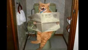猫はみがき.png